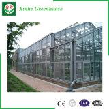 Het Groene Huis van het Gehard glas van de Tuin van de multi-Spanwijdte van de landbouw