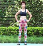乾燥した適当な細くの女性のスポーツの摩耗のスポーツの適性の連続した試しのヨガの動悸Legging