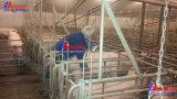 Máquina de Ultra-sonografia veterinária, os veterinários em equipamentos, instrumentos de Veterinária, vaca em teste de gravidez, instrumentos obstétrica, reprodução de ultra-som