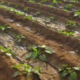 Sistema de irrigação da água da planta de Drippling