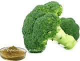 Reiche Vitamin-natürlicher Brokkoli-Auszug 0.5%~98% Sulforaphane, 4:1 ~20: 1