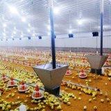 Ensemble complet de haute qualité pour les poulets de chair de volaille automatique de l'équipement