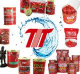 Goma de tomate conservada puré sano de la goma de tomate de Turquía 800g