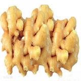 Het Massa Bevroren Ontwaterde Poeder van uitstekende kwaliteit van de Gember, het Uittreksel van de Gember, Ginger P.E.