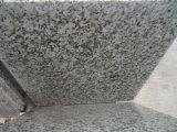 G439 Wall&Floor를 위한 큰 꽃 백색/화강암 석판