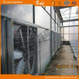 La película superior cubrió el invernadero de la hoja de la PC de la fachada para plantar vehículos