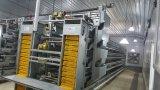 Poulet / Maison de volaille et ferme de volaille avec équipement complet Équipement automatique
