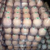 계란 쟁반 PVC 플라스틱 용기 처분할 수 있는 수송용 포장 상자