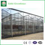 Vidro de agricultura Green House para produtos hortícolas/Flores