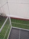 Fabrik-Preis-Vogel-Rahmen-großer Vogelaviary-Haustier-Rahmen-im Freienrahmen