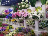 Flores artificiais de Milão Rose 75cm Gu-D70196