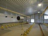 Azienda agricola di pollo d'acciaio prefabbricata della costruzione da vendere