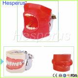 歯学部のための口頭シミュレーションの方法システム歯科幻影ヘッド
