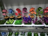 Migliori piante artificiali di vendita di Gu-SD0267 succulente