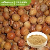 Estratto naturale Sapindoside 40%-80% delle saponine di Soapnut di alta qualità dei campioni liberi