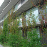 (Fabbrica della Cina) maglia rampicante molle fatta a mano di sostegno della pianta dell'acciaio inossidabile