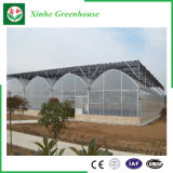 野菜のためのQingzhou PE/Pofilmの温室
