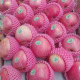 Neues Getreide-gute Qualität von rotem Qinguan Apple