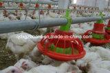 보일러 집, 가금은, 흘려진 빛 강철 구조물 닭 유숙한다 (XGZ-TX-0301)