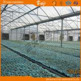 최신 판매 식물성 성장하고 있는을%s 상업적인 다중 경간 플레스틱 필름 온실
