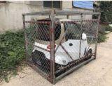 EWG-mini elektrisches Auto-preiswertester elektrisches Auto 2 Seater elektrischer Fahrzeug-elektrisches Auto-Preis