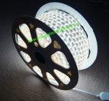 Luz de tira del certificado 220V SMD2835/5050 LED del Ce