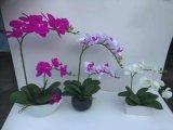 Flores artificiales superventas de la orquídea natural del tacto en el crisol Wp001