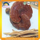 Грибы Ganoderma Lucidum для здравоохранения