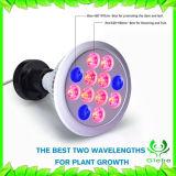 La vendita calda 12W LED coltiva lo spettro completo chiaro di Ce/Rohs per le piante d'appartamento Veg ed il fiore