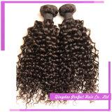 ねじれたカールは毛の織り方のブラジルの人間の安い毛で縫う