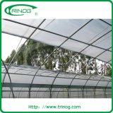 Hoge tunnel landbouwserre voor hydrocultuursysteem
