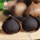 Brand New Organic Black Garlic for Wholesal 100g