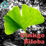 Ginkgo Biloba Auszug/Flavon-Glykosid/Terpen-Lakton