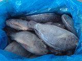 Tilapia de Filet sorteert de Gehele Ronde van de Vissen van a en Tilapia