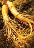 Extracto herbario el 98% Ginsenoside RF del Ginseng del fabricante del extracto