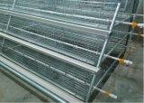 Petites cages de poulet de poulette de poussins de seule de modèle de poulette de poulet ferme de cage (un type)