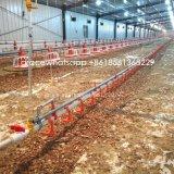 Chargeurs automatiques de prix inférieur de la volaille et les buveurs de la production de poulets de chair
