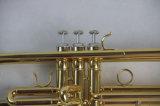 Trompette trompette populaire/ Étudiant (TR-100)
