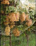 과일 나무 새 그물세공 HDPE 새 그물