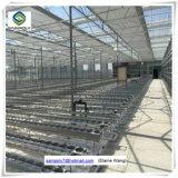 Multispan Hydroponik PC Blatt-landwirtschaftliche Gewächshäuser