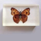 높은 투명한 나비 Embedment 아크릴 문진