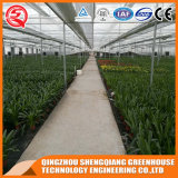 중국 Agricultur 다중 경간 유리 온실