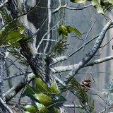 Tsautop 0,5 m de ancho de camuflaje y transferencia de agua de árbol de la película de cine Hidrográfico de la impresión de la película de inmersión Hydro PVA Soluble en agua con la impresión de film Tsmy1002-1