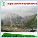 농업 온실 건축