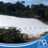 tela 17GSM não tecida UV para a agricultura