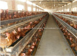 鉄骨構造の家畜の家の構築が付いている肉焼き器のための農機具