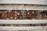 A Frame Layer (egg) system Layer Chicken Cage equipment for Poultry farm