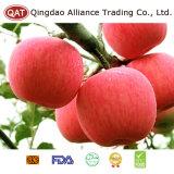 Qualidade superior FUJI fresco Apple da colheita nova