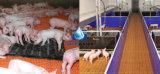 De Plastic Vloer van uitstekende kwaliteit van het Latje voor Varkens
