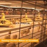 Cages automatiques de grilleur de poulet de matériel de ferme de grilleur